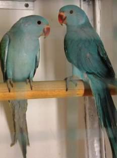 uccelliesotici